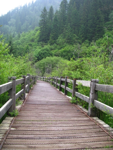 Boardwalks for visitors to find an array of flora and fauna at Jiuzhaiguo's forest